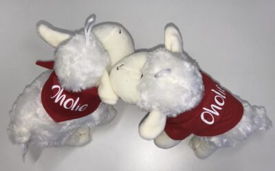 OHOlie-Schaf
